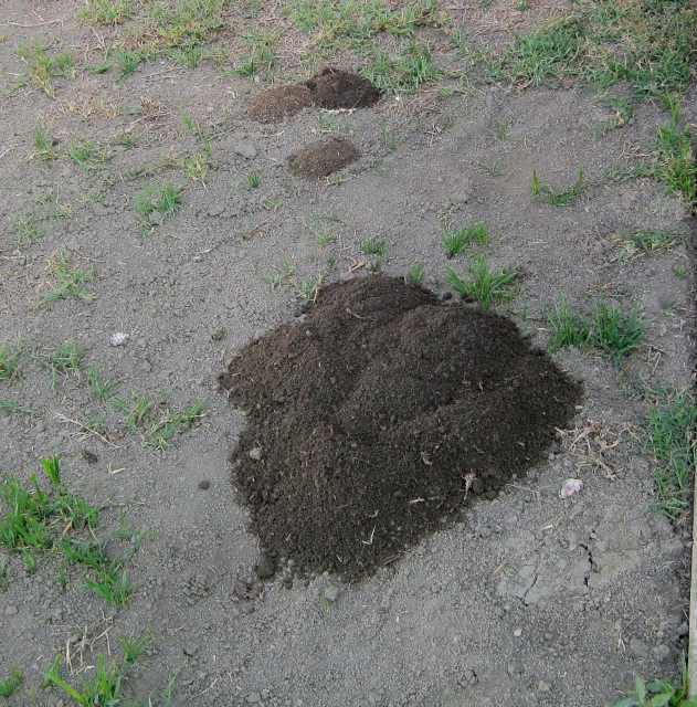 declaring war on gophers they ve been going to town in my backyard