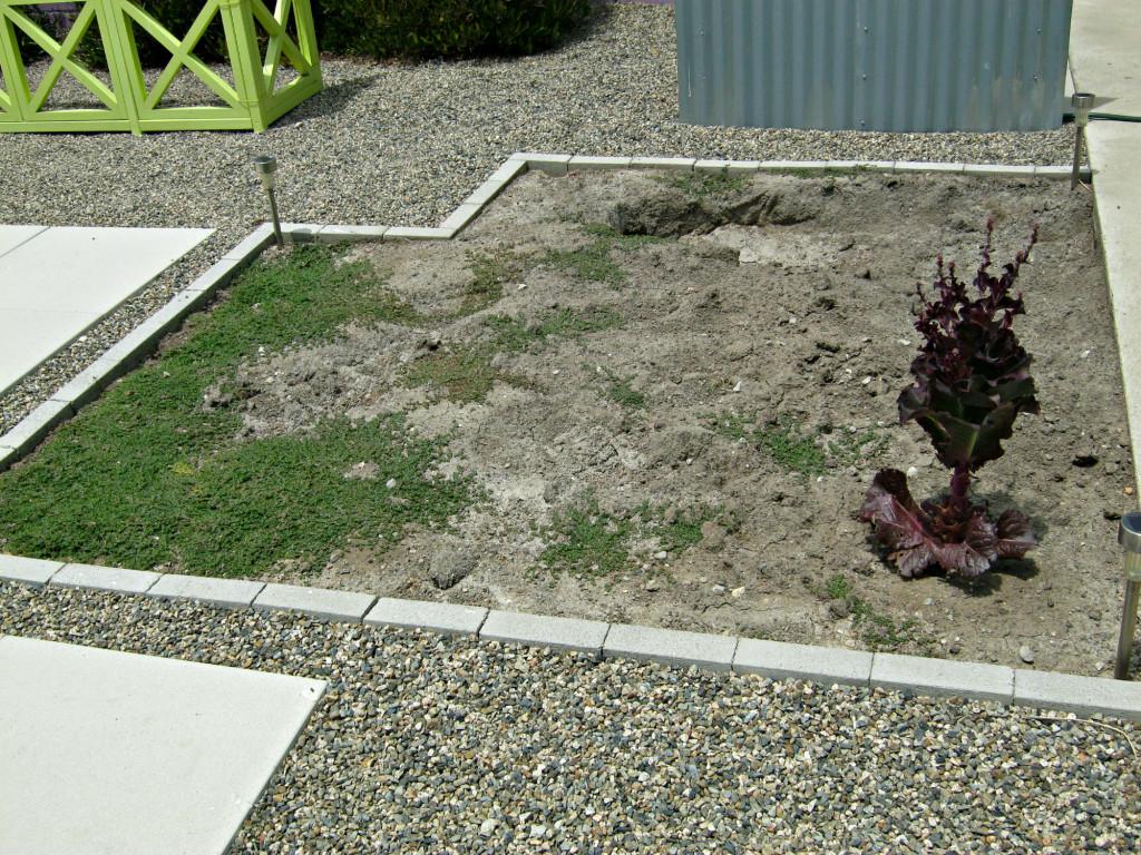 Vegetable garden before installing gopher fence